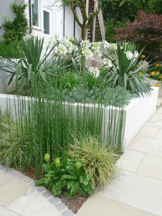 Planting and plants by philip nash designplanting and plants for Plant garden design